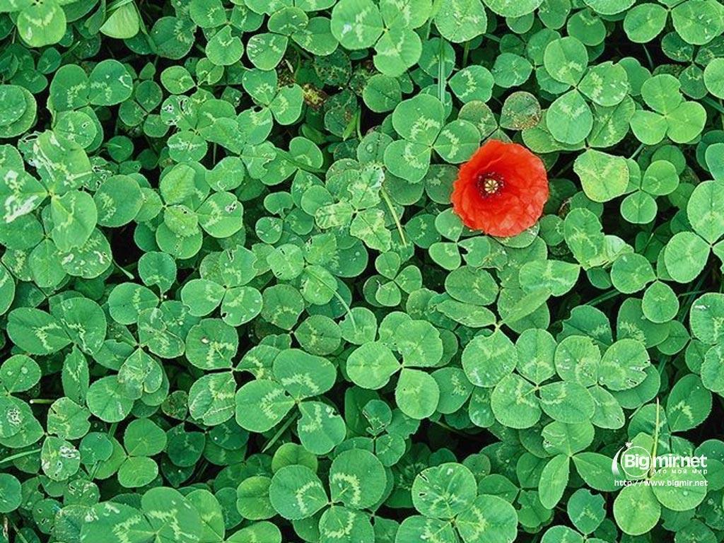Картинки цветов для форумов 6