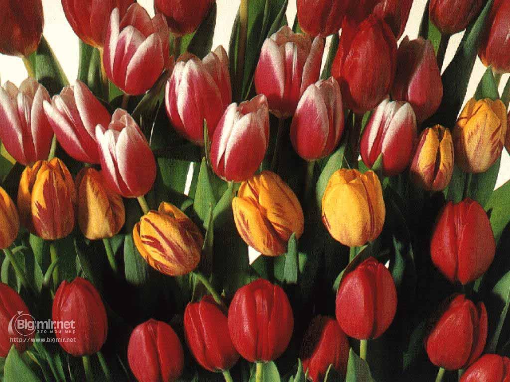 http://buket.ck.ua/album/wallpapers/march8/flowers-9-1024.jpg