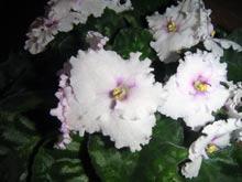 Кімнатні рослини що приносять
